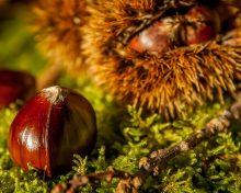 La Châtaigne, un parfum d'automne chaleureux