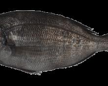 Dorade grise, recommandée par Mr. GoodFish