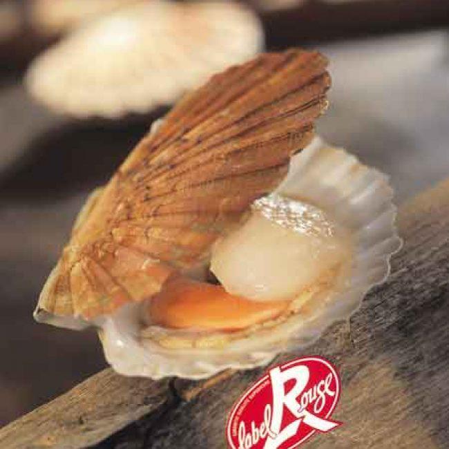 Label Rouge : Coquille Saint-Jacques de Normandie