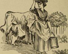 Histoire. Pénurie de beurre : un comble pour un produit qui fit la réputation de la Normandie !