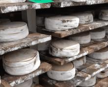 Le retour d'une star de nos plateaux de fromages : le Mont d'Or
