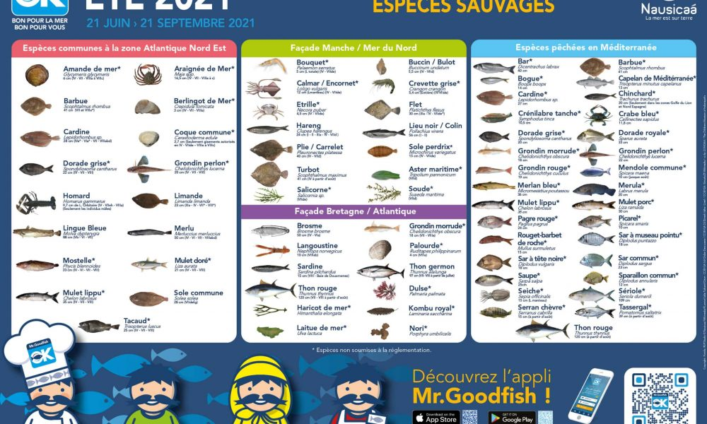 Mr.Goodfish nous présente le calendrier des pêches Été 2021