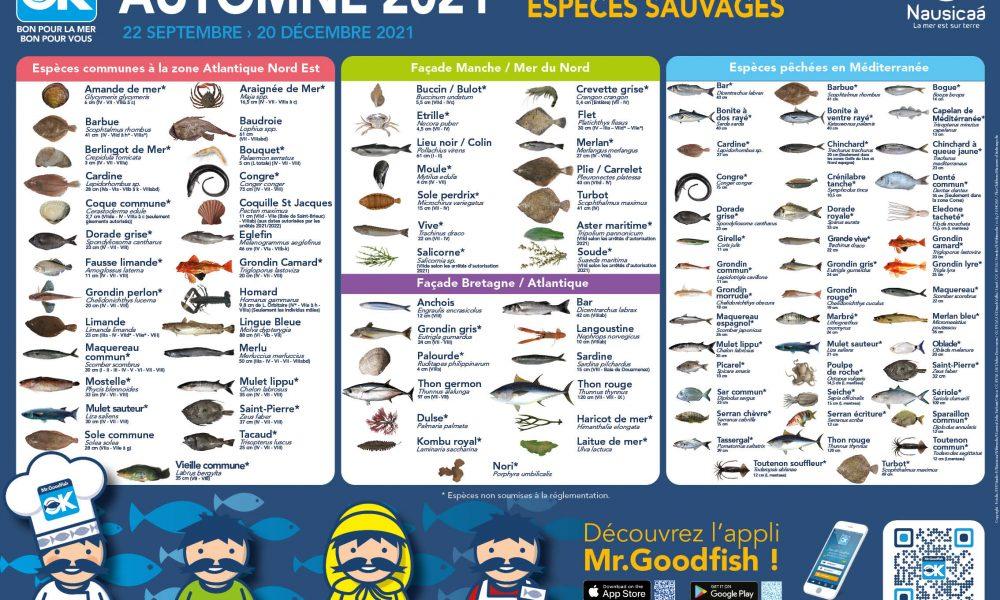 Le programme Mr.Goodfish fête l'arrivée de l'automne avec un nouveau poster !