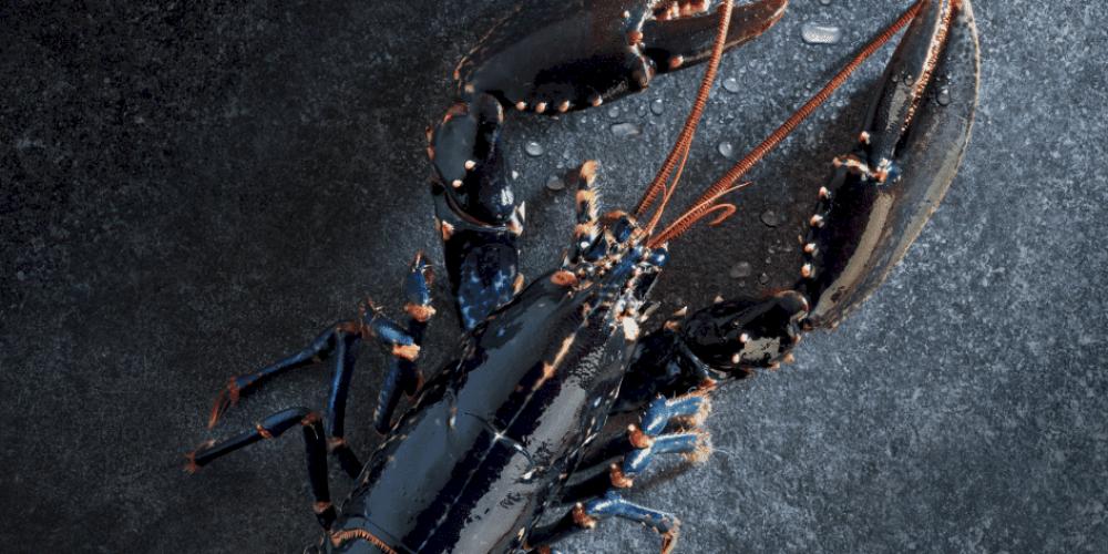 Nouvelle saison, nouveau Premium hiver 2019 ! METRO vous présente sa 34ème édition
