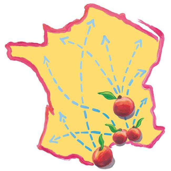 pêches et nectarines de France