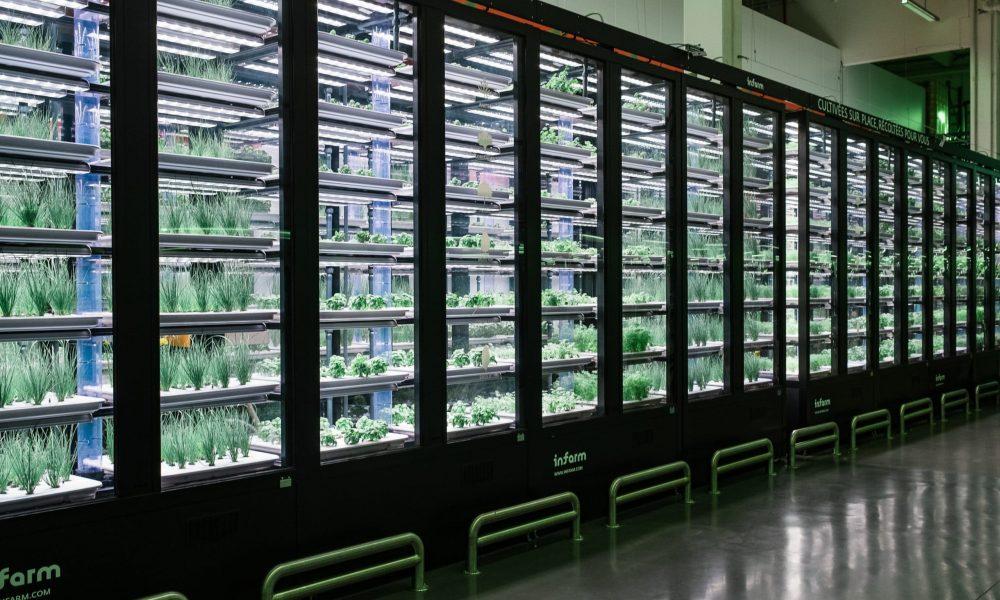 METRO accueille le premier potager urbain indoor de France dans son entrepôt de Nanterre